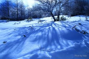 信州冬物語 影