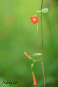 オレンジ色のかわいい花