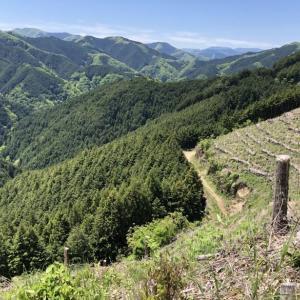 今熊神社から盆掘間伐作業道へ-1