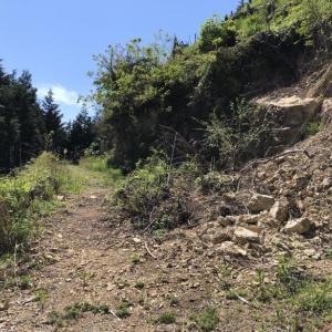 今熊神社から盆掘間伐作業道へ-2