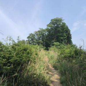 白谷沢コースで黒山へ3