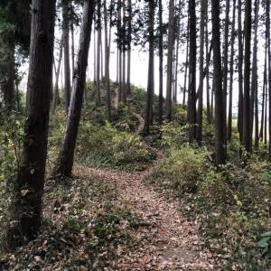 ひので野鳥の森公自然園を適当に攻める3