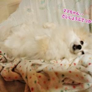 ☆幸せ添い寝☆