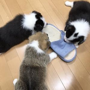 """""""あいちゃんBABY""""仲良く共同作業♪"""