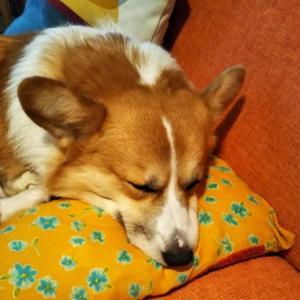 なんて幸せそうなこの寝顔!