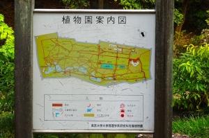 ぶらり秋旅2019 その3 小石川植物園