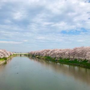 お花見散歩*2020
