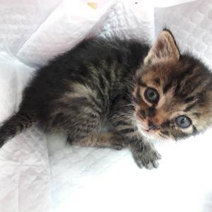 新入り・保健所から&ベテラン保護猫になってる