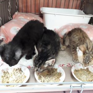 保健所からの兄妹たち&子猫たち