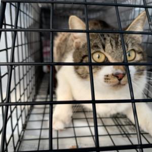 不妊手術をしたい猫たち