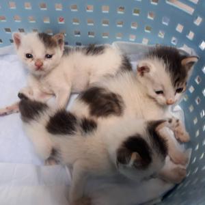保健所からの三兄妹はガリガリでした
