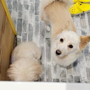 お洗濯と元保護犬