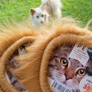 100均でライオンになろう