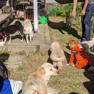 犬散らかる庭&新入りがやって来た!