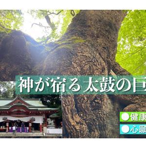 樹齢二千年超の巨樹の神様に逢えるパワースポット「熱海・来宮神社」