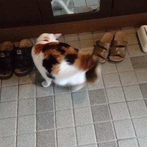 飼い猫リンの獲物