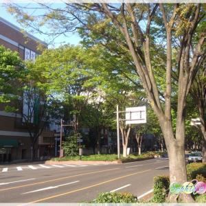 すぐに予約が埋まる地元・仙台の心理カウンセラー・心理セラピストさん。