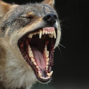 In bocca al lupo!