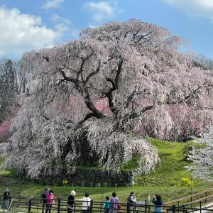 Frühlingsglaube~春への憧れ