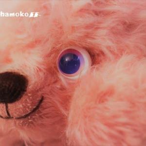 #春 虹色オメメ☆さくらの季節に桜ピンクのぷくちゃん…オトドケシマシタ~♬