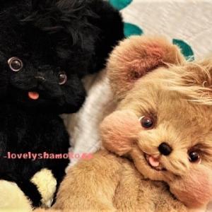 笑顔いっぱいな☆抱きぐま…フワフワ~~(●´ω`●)💛