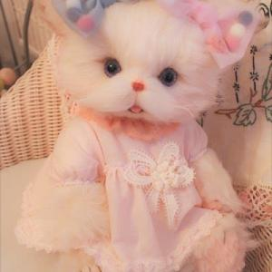 ロングアルパカ☆抱っこ白猫ちゃん♪…オトドケシマシタ~💖