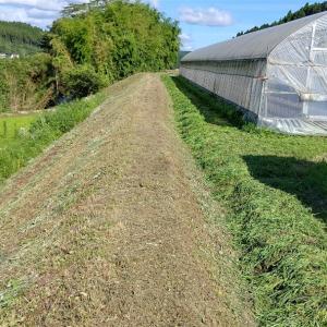 昨日から少しづつ草刈り❗️