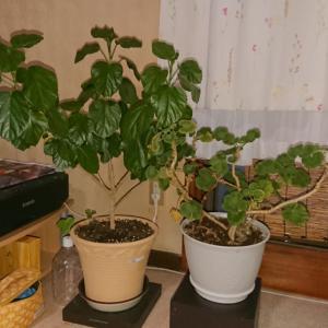 寝室にはじめての観葉植物