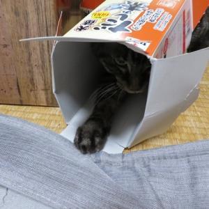 箱入り猫…