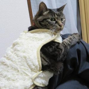 久し振りのハナ猫