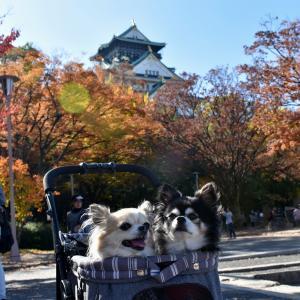 秋の大阪城公園2019(大阪市中央区)