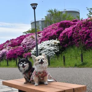浅香山緑道(大阪府堺市)
