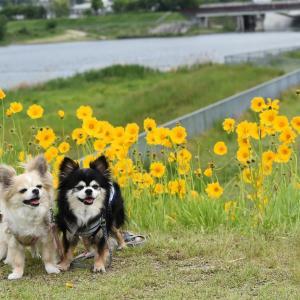 狭山池公園(大阪狭山市)