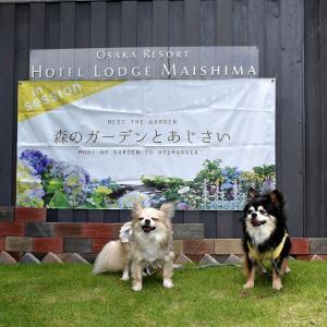 ホテル・ロッジ舞洲のアジサイ展(大阪市此花区)