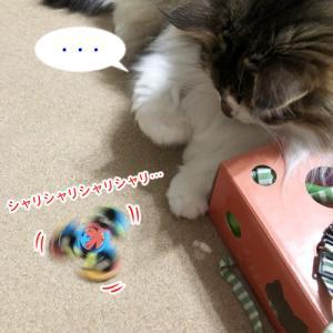 猫の聴覚は優れもの。