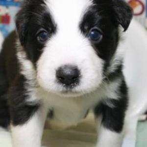 ☆6月23日☆6月24日生まれ☆子犬情報☆新しい家族を迎えませんか?