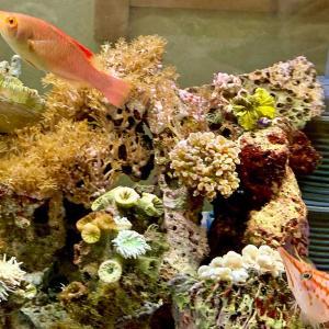 湘南水族館、ブログ復活の兆し!?