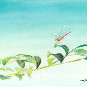 10月水彩色えんぴつ教室「赤とんぼ」