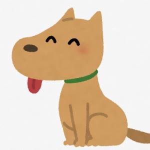 フィンランド、『コロナ探知犬』を空港に導入 「ほぼ100%探知できる」と誇示
