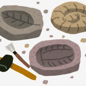 【英国】旅行計画中の夫婦がにGoogle Earthで「イギリス最大級の化石群」を発見