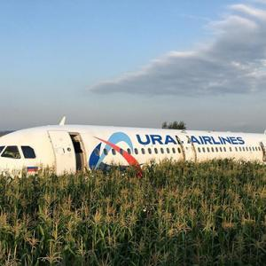 【とうもろこし畑の奇跡】A321旅客機が離陸直後にバードストライク!胴体着陸するまでの一部始終