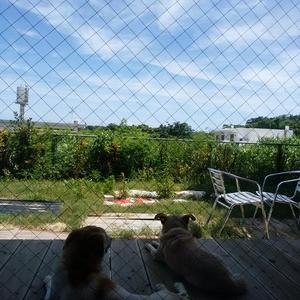 空と犬と汚庭