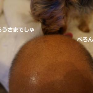♪頭まるっ