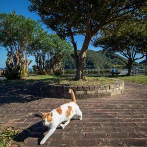 須崎市で鍋焼きラーメンの後は、土佐市で猫と遊ぶ その5