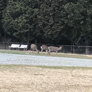 鹿さんとパンケーキ(^^)