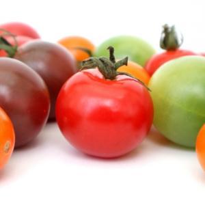 旬の野菜は栄養価が高い。犬の手作りご飯にも季節を取り入れるメリットをご存知ですか?