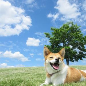 犬のストレスを理解して健康を守る | コラム