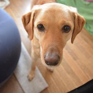 新しいサイト始めました | 犬の体とよくある病気ガイド