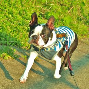 犬の健康のために、獣医さんと良いコミュニケーションを取ろう! | コラム