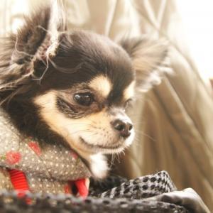 犬の病気や健康のこと。最後に決めるのは「飼い主」| コラム